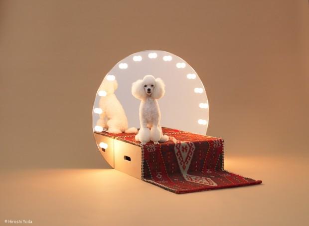 Architektur für Hunde