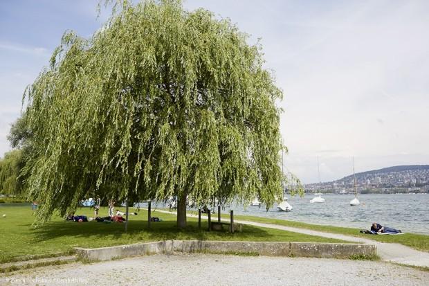 Zürich ist grün